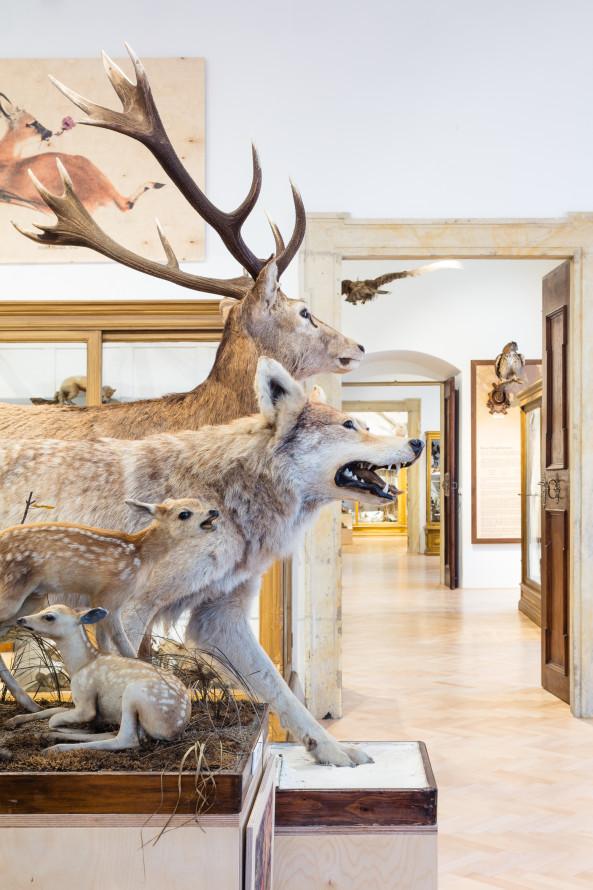 Stálá expozice domácí fauny a lesnictví Lovecko-lesnického muzea na zámku Úsov